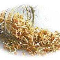 Цілющі властивості паростків пшениці