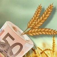 Ціна на зернові в україні в кінці липня 2014
