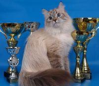 купити невська маскарадна кішку