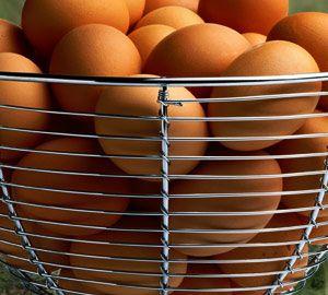 Яйця цесарки фото
