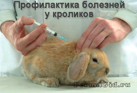 в руках у ветеринара кролик