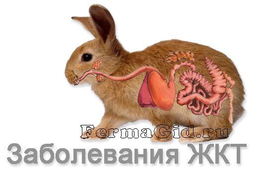 шлунково-кишкового тракту кролика