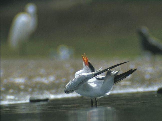 Чеграва є єдиним представником свого роду - Hydroprogne.