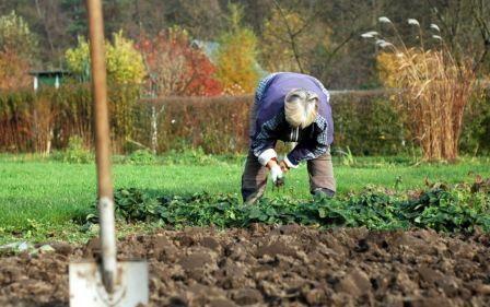 Чим і як обробляти грунт восени від хвороб і шкідників