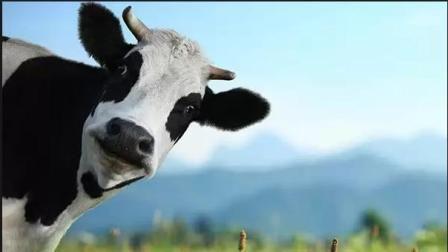 Корми для корів
