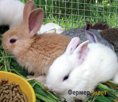 Кролі їдять комбікорм