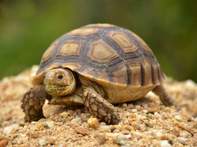 Переважна більшість видів черепах - травоїдні.