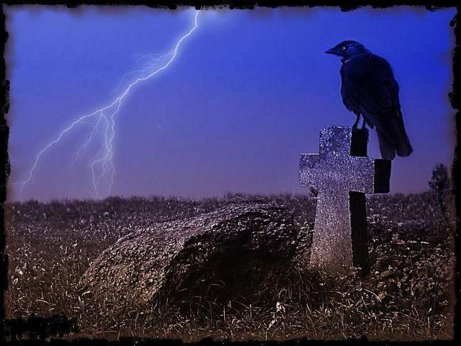 Напевно через чорного забарвлення і переваги падали люди зв`язали цю птицю зі смертю. Однак ворон - це санітар природи. Дуже розумний санітар