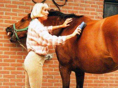 Чистка коні і догляд за шерстю коні
