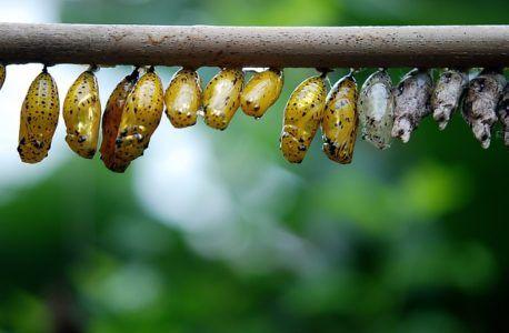 На фото личинки метеликів