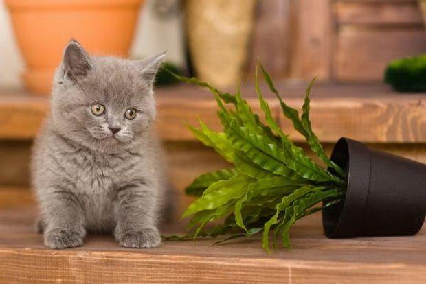 Що робити, якщо кішка їсть квіти