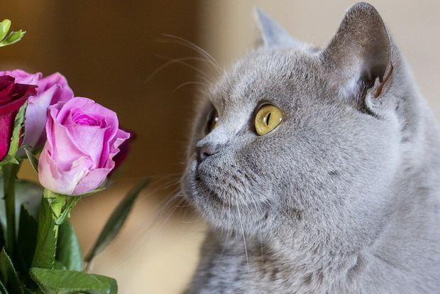 Що робити, якщо кішка отруїлася