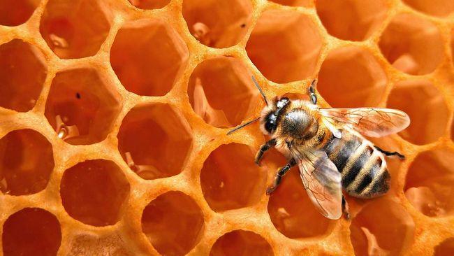 У період роїння бджоли не годують свою царицю.