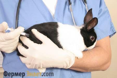Профілактика і лікування кокцидіозу у кроликів