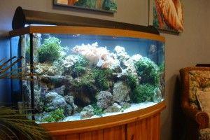 Що потрібно для домашнього акваріума?