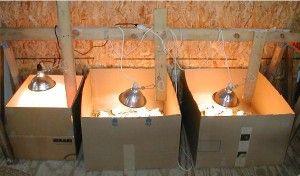 Обігрів курчат в коробці за допомогою ламп