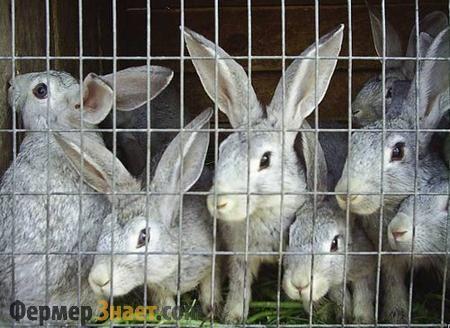 Кролики в клітці