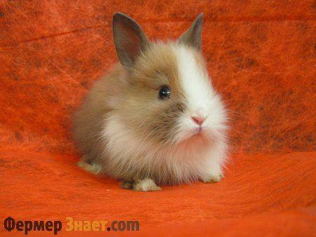 Що слід знати про карликових кроликів