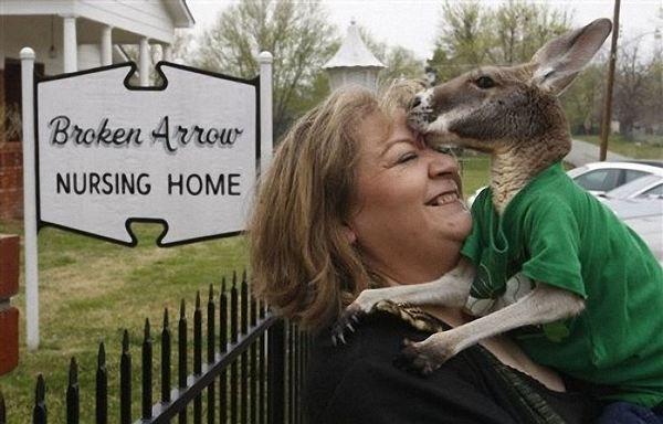 Мешканку Оклахоми вирішили позбавити паралізованого кенгуру