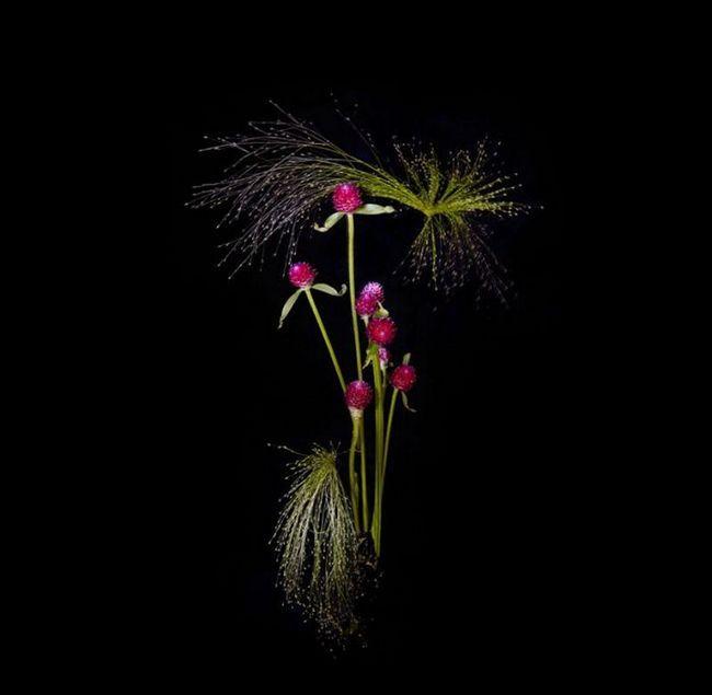 Квітковий салют Сари Ілленбергер (Sarah Illenberger)