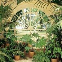 Декоративні рослини в інтер`єрі