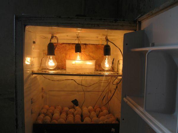 Інкубатор з старого холодильника