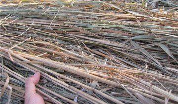 Фото стебел бамбука для штифтів, all.biz