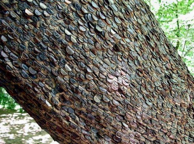 Грошові дерева в Англії