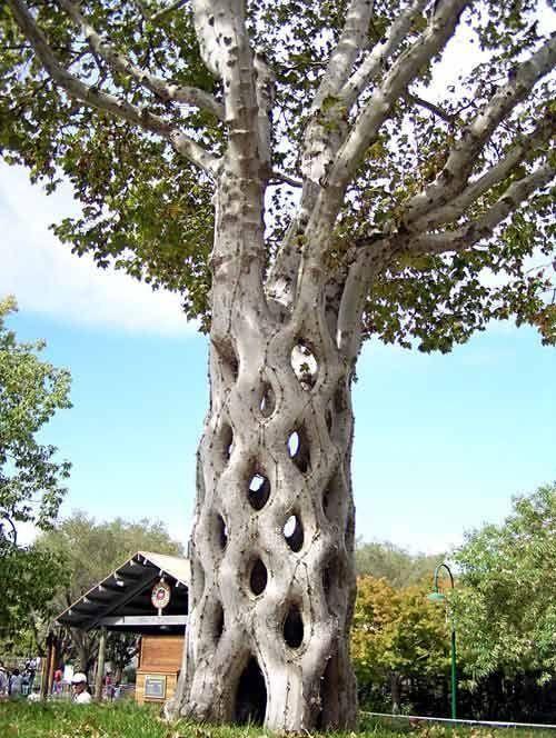 Дерева, що підкорили вічність