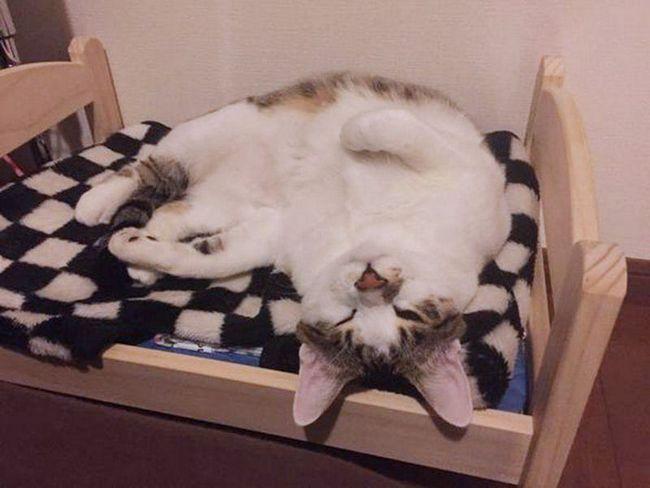Дерев`яні ліжечка для кішок і собак