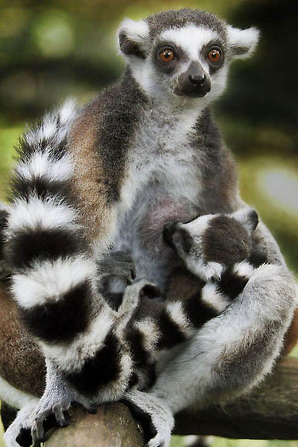 Дитинчата диких тварин