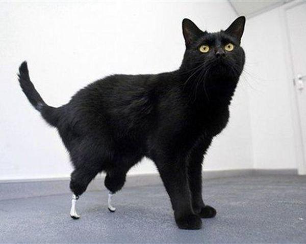 Дев`ять надихаючих прикладів з тваринами, які використовують протези