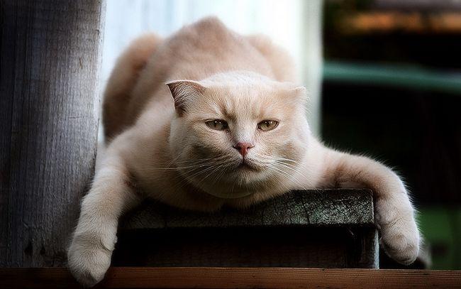 Діарея у кішок