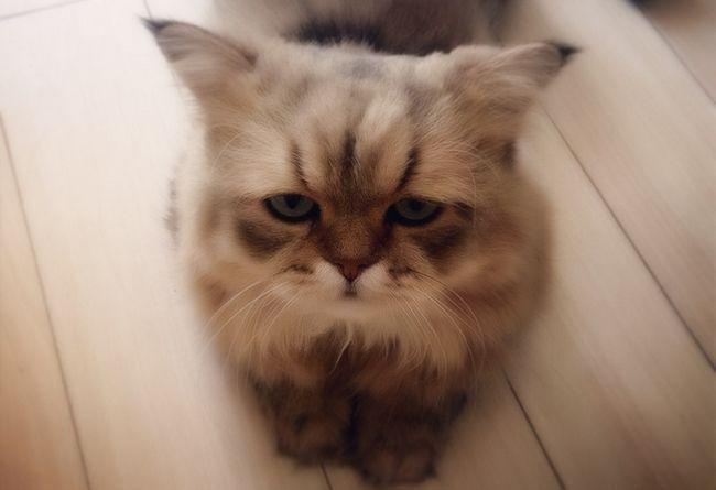 Пронос у кошенят