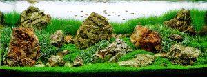 Дизайн акваріума