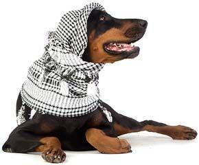 Добермани пінчери. Характер, загальний опис собаки, дресирування і зміст.