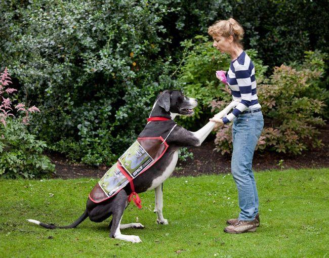 Дог на прізвисько Купер - найбільша собака в світі