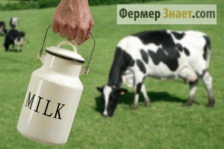 Доїмо корову самі: все що варто про це знати