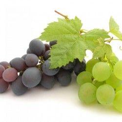 Домашній виноград