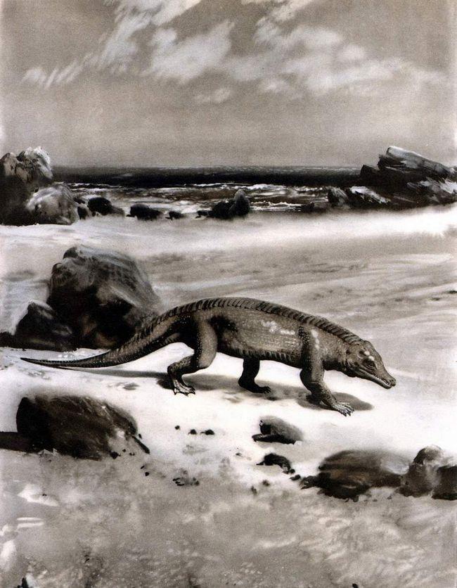 Протозухії (Protosuchus).