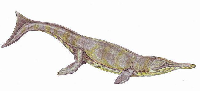 Метріорінх (Metriorhynchus).