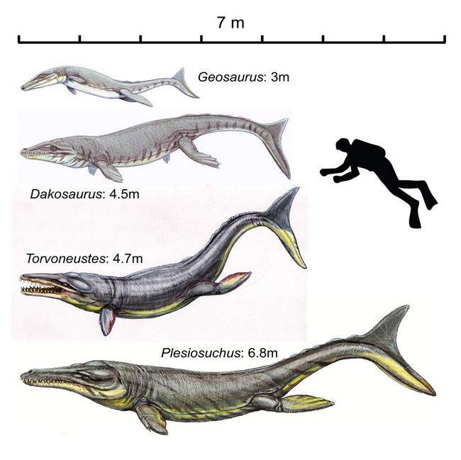 Геозавр в порівнянні з іншими древніми рептиліями.