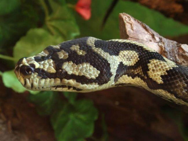 Змії теж бояться впасти з дерева