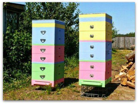 Двухкорпусное зміст і багатокорпусний зміст бджіл