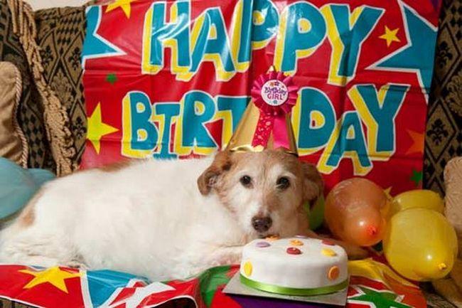 На дні собака відсвяткувала свій 22-й день народження