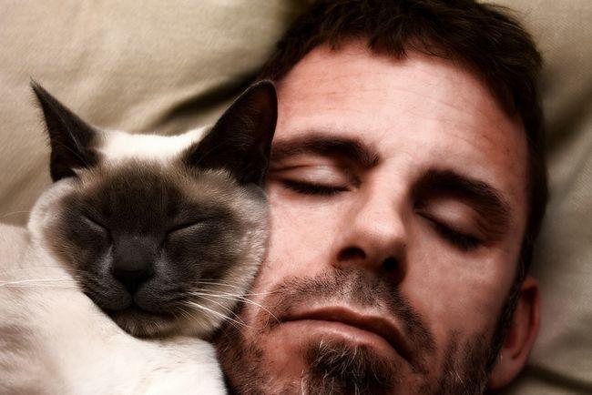 Якщо кішка спить у вашому ліжку, що це значить?