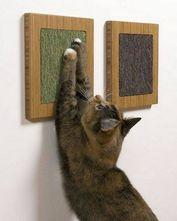 Стрижка пазурів у кішок
