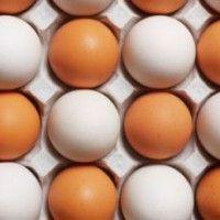 Фактори, що впливають на яєчну продуктивність