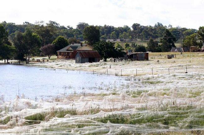 Феномен Волосся ангела: павуки огорнули будівлі і поля ковдрами з павутини