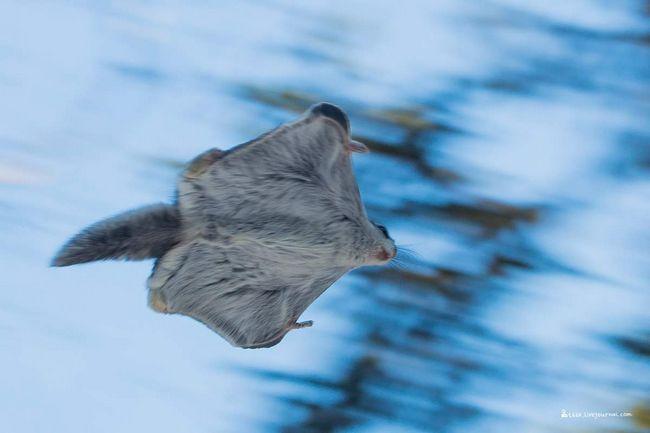 Шокуючий кадр був зроблений Челябинским фотографом-анімалістом.